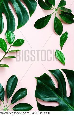 Tropical Leaves Monstera On Pink Background. Leaf Of Green Monstera Plant On Pink Background With Co