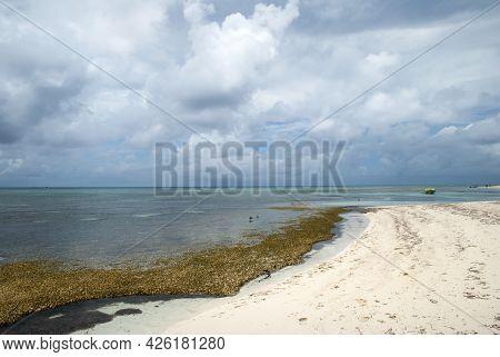 The Wild Beach Covered With Algae On Grand Turk Island (turks And Caicos Islands).