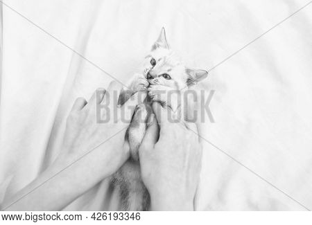 Happy Lovely Cat. Cute Kitten In The Hands Of Woman. Pet Therapy. White Fluffy Kitten Laying On Bed.