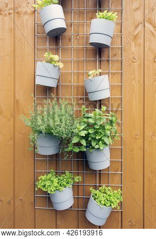 Fresh Herb Hanging In Modern Pots In Garden On Wooden Background Wall Modern Decoration Outdoors Of
