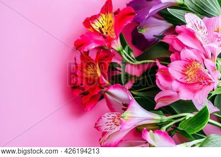 Flatlay With Beautiful Peruvian Lily Flowers Isolated On Pink Background.