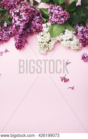 Purple And White Lilacs On A Pink Background.