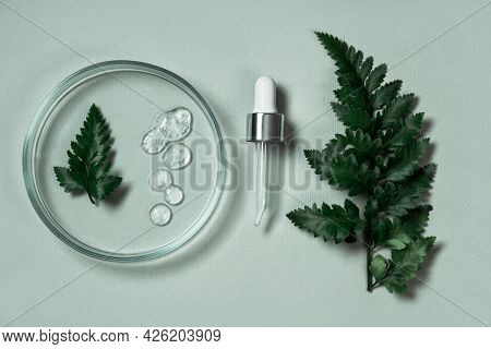 Cosmetic Products On A Pastel Green Background With Eucalyptus And Fern Leaves. Natural Cosmetics Fr