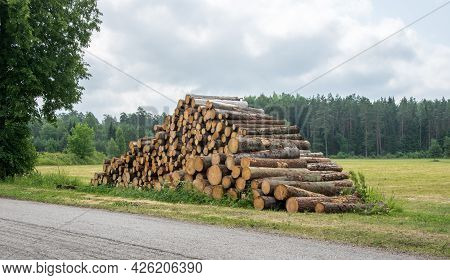 Big Pile Of Firewood Piled By The Road