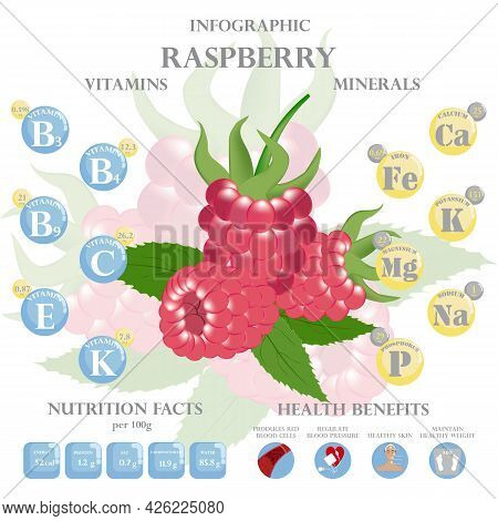 Health Benefits And Nutrition Facts Of Raspberry Infographic Vector Illustration.