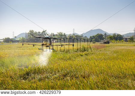 Agriculture Drone Farming Fly To Spray Fertilizer On The Rice Fields. Modern Agricultural And Smart