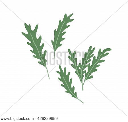 Arugula Leaves Composition. Green Leaf Of Rucola. Fresh Garden Rocket. Natural Organic Food. Eruca S
