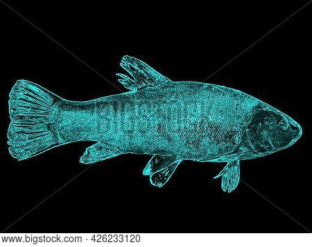 Illustration Of A Fish Tench Glowing In Blue On A Black Background. Freshwater Fish Tench. Fishing C