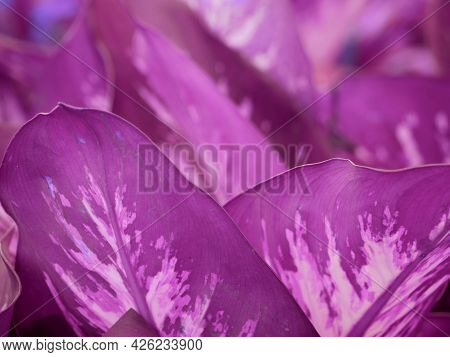 Purple Color Leaves Background Commercial Presentation For Commercial Use