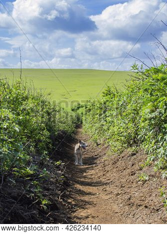 A Dog On A Dirt Road To The Hills, Picture Of A Dog On A Dirt Road To The Hills With Clouds In The B