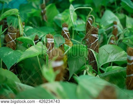 Beautiful Green Plant Packaging Presented For Sale At Street Nature Product Shop.
