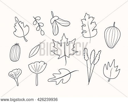 Set Of Autumn Herbarium In Doodle Style. Leaf Foliage And Different Berries. Wild Forest Plants. Vec