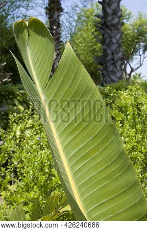 Palm Tree Leaf Sunny Day With The Sunrays Falling On The Leaf Rock And Blue Sky On Background Close