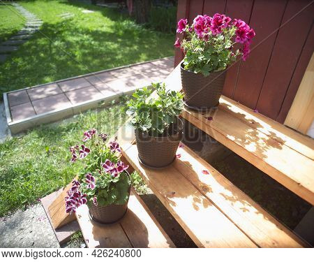 House Entry Porch Steps Decorated With Geranium In Pots