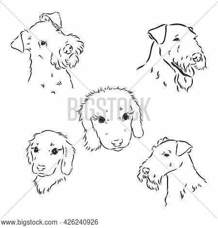 Airedale Terrier Dog. Hand Drawn. Vector Illustration