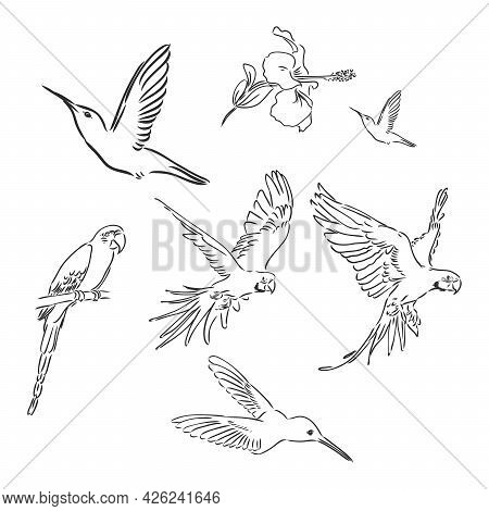 Tropical Parrot And Bird Head Black And White Vector Outline