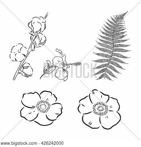 Hand Drawn Vintage Floral Elements. Decor Flowers Vector