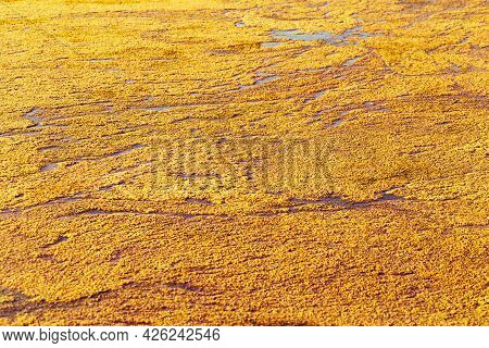 Bright Nature Texture Water Surface On Sunlight, Water Ripples On Small Overgrown Lake, Natural Envi