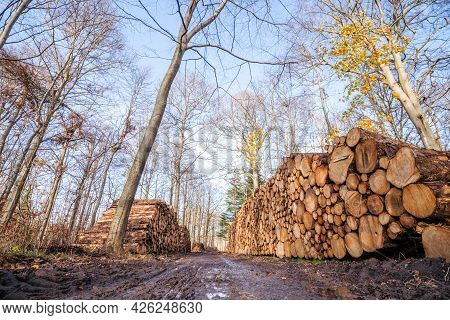 Timber Stacked In A Muddy Forest In The Fall On A Bright Day With Blue Sky