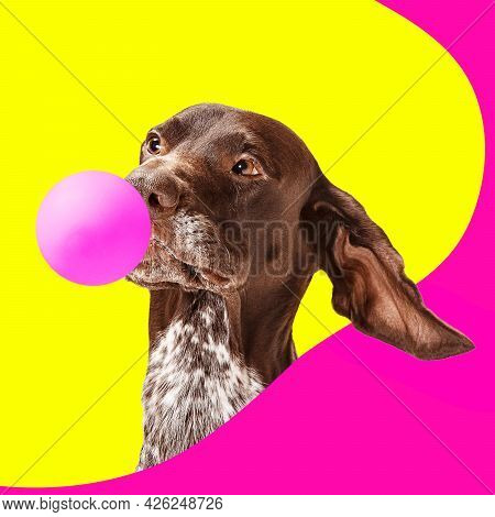 Contemporary Artwork Collage Concept. Portrait Of Dog, Setter With Pink Balloon Isolated On Bright Y