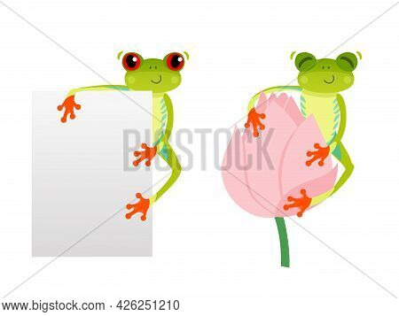 Red Eyed Frog With Blank Background. Tree Frog On Lotus Flower. Cute Animal. Vector 10 Eps Illustrat
