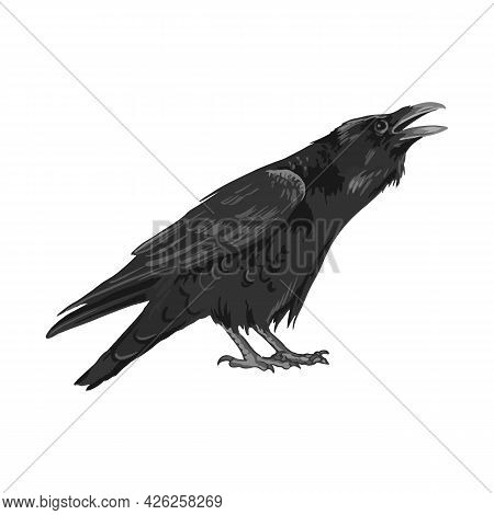Raven Drawing High Quality Vector Illustration.flying Raven.halloween Crow Design