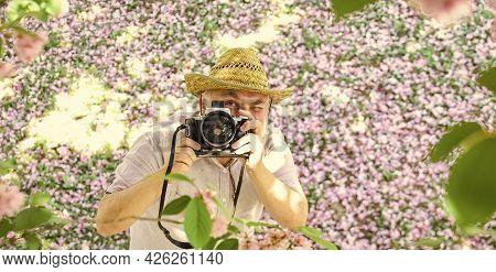 Feeling Excited. Sakura In Full Bloom Photography. Senior Bearded Man Photographing Blossom. Profess