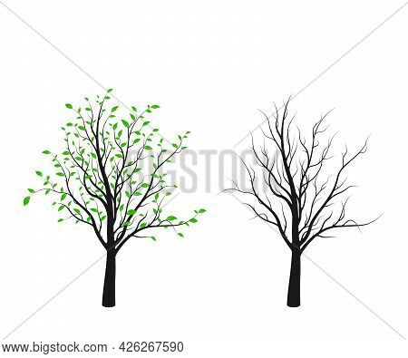 Tree Silhouette With Green Leaves And Without Isolated On White Background. Vector Illustration