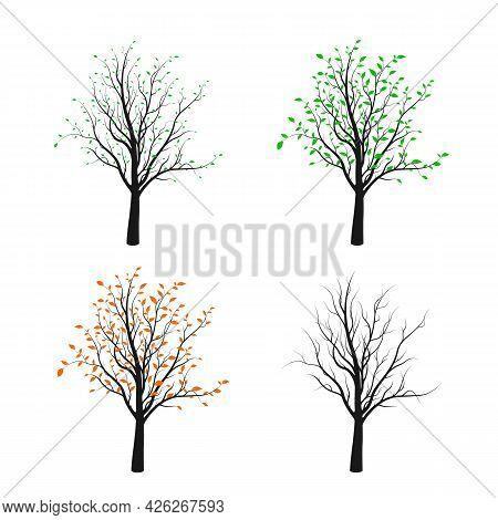Four Tree Silhouette Illustrated Four Season Of Nature. Vector Illustration