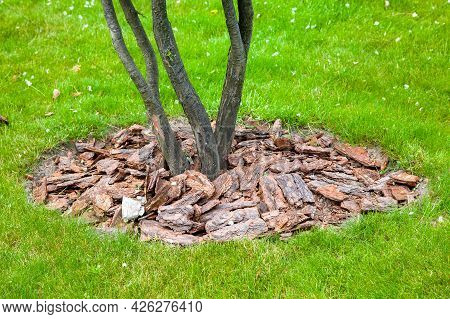 Mulch From The Bark Of Pine Tree Around The Growing Bush Trunk On Green Meadow, Landscaping Of Growt