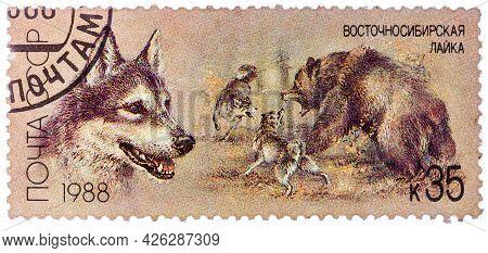 Ussr - Circa 1988: A Stamp Printed In Ussr, Shows East Siberian Eskimo Dog, Bear Hunt, Series Huntin