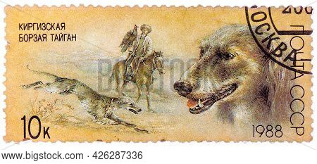 Ussr - Circa 1988: A Stamp Printed In Ussr, Shows Kirghiz Greyhound, Falconry, Series Hunting Dogs,