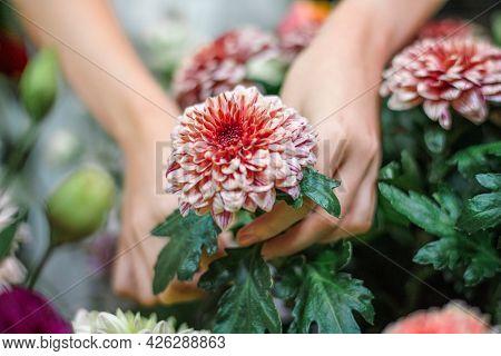 Florist arranging a bouquet of pip salmon