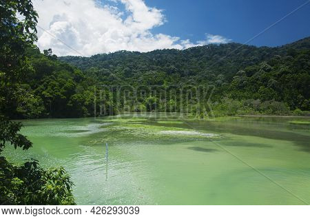 A Unique Salt And Fresh Water Meromictic Lake Within The Penang National Park Reserve On A Sunny Sum
