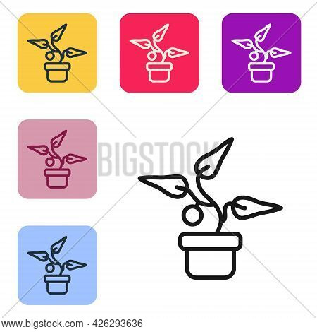 Black Line Plant In Pot Icon Isolated On White Background. Plant Growing In A Pot. Potted Plant Sign