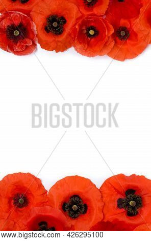 Frame Of Flowers Red Poppy ( Papaver Rhoeas, Corn Poppy, Corn Rose, Field Poppy, Red Weed ) On A Whi