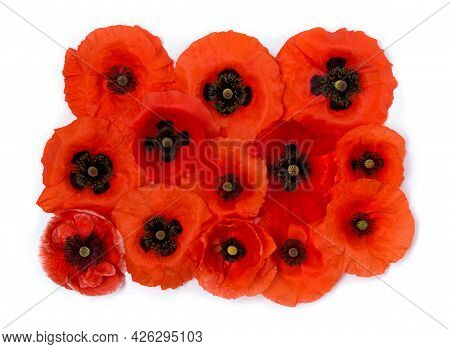 Flowers Red Poppy ( Papaver Rhoeas, Corn Poppy, Corn Rose, Field Poppy, Red Weed ) On A White Backgr
