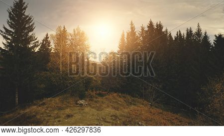 Sun over pine trees at mountain top. Aerial nobody nature landscape. Countryside village at green valley. Autumn greenery forest at grass hill. Carpathians mount ranges, Ukraine, Europe