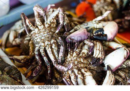 Large Group Of Alive Sea Crabs Bundled For Sale At Supermarket.