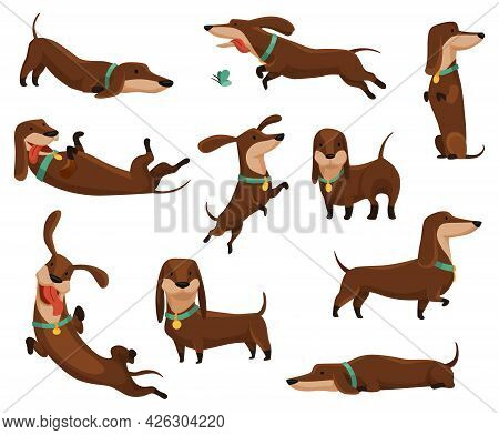 Group Of Dogs Dachshund. Cute Funny Characters Portrait In Different Poses. Short-legged Pets With L