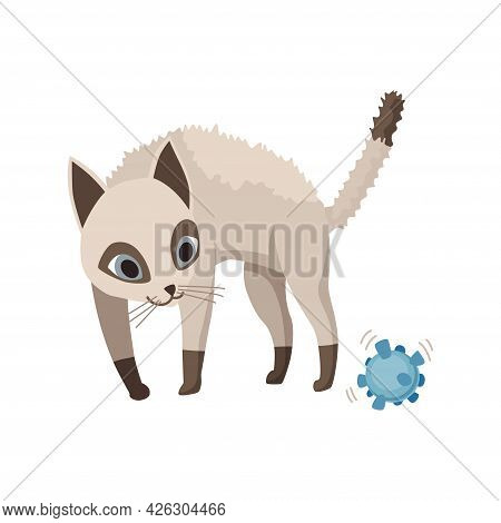 Cartoon Cat Character. Siamese Colorpoint Pet. Adorable Domestic Cat Surprised By A New Toy. Funny H