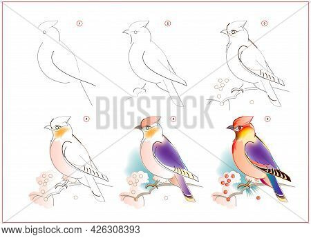 How To Learn To Draw Sketch Of Waxwing Bird. Creation Step By Step Watercolor Painting. Educational