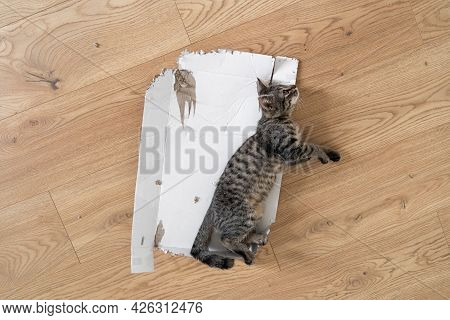 Grey Tabby Kitten Lie Down On The Floor In Torn Cardboard Box. Funny Cat Play At Home. Sleeping Rela