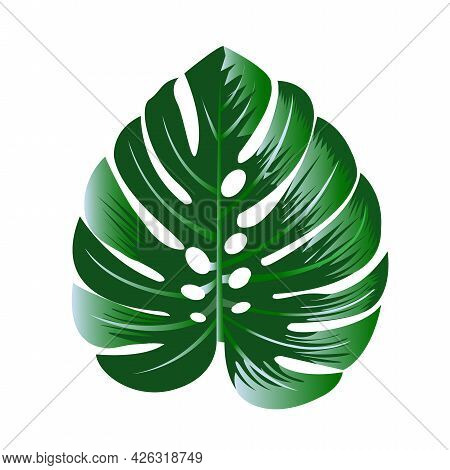Green Monstera Leaves On White Background Isolate