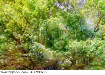Green Texture Background, Photos Blurred And Bokeh Under The Tree. Fresh Nature Healthy Or Bio Conce