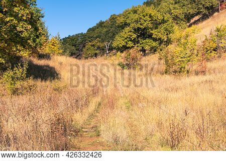The Path Between The Hills Overgrown With Trees. Autumn Landscape With Dry Grass And Trees With Leav
