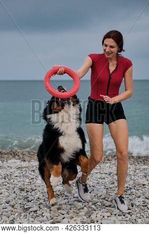 Establish Contact With Pet On Walk. Caucasian Pretty Red Haired Woman Plays With Bernese Mountain Do