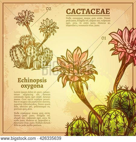 Cactus Botanical Card With Plant Latin Name On Retro Style Paper Vector Illustration