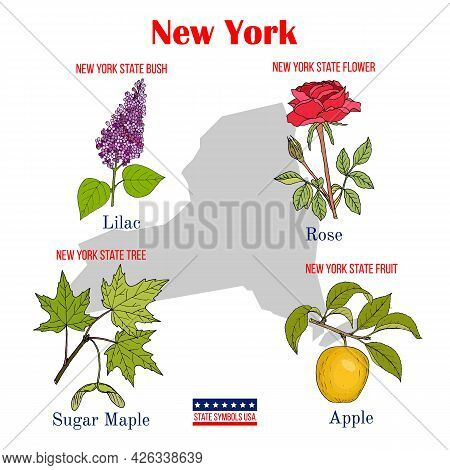 New-york. Set Of Usa Official State Symbols. Vector Hand Drawn Illustration