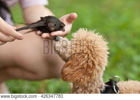 Cute Funny Small Little Pet Dog In A Park Outdoor Looks At A Swift Bird